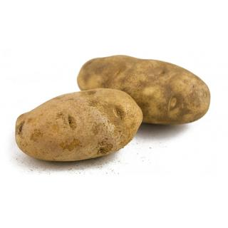 Kartoffeln Gunda mehlig
